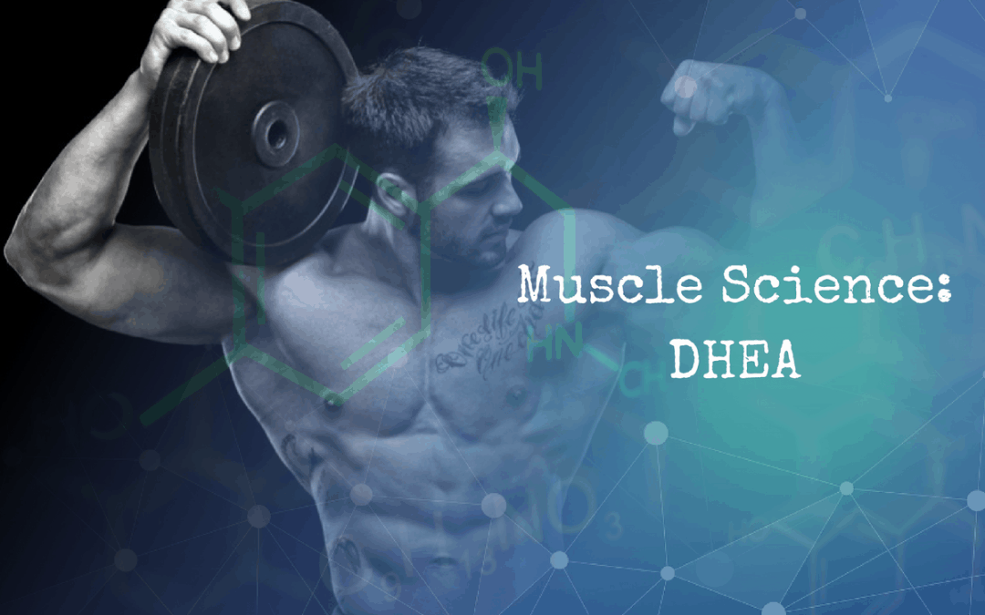 Muscle Science: DHEA